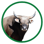 produk pasar hewan
